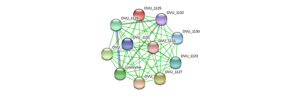 DVU_1125 protein (Desulfovibrio vulgaris Hildenborough) - STRING interaction network