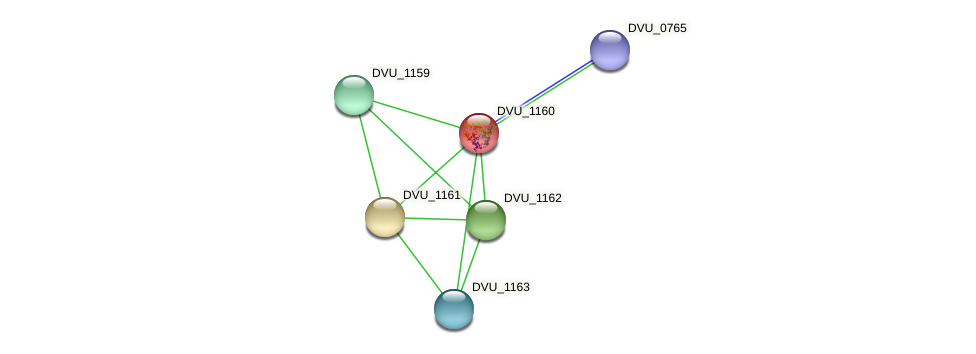 DVU_1160 protein (Desulfovibrio vulgaris Hildenborough) - STRING interaction network