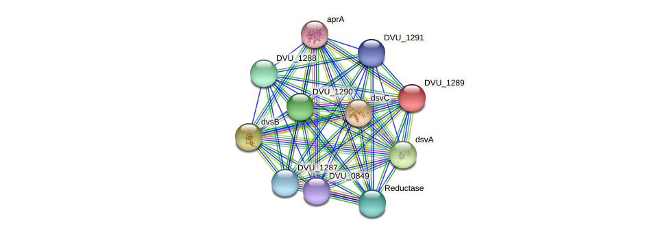DVU_1289 protein (Desulfovibrio vulgaris Hildenborough) - STRING interaction network