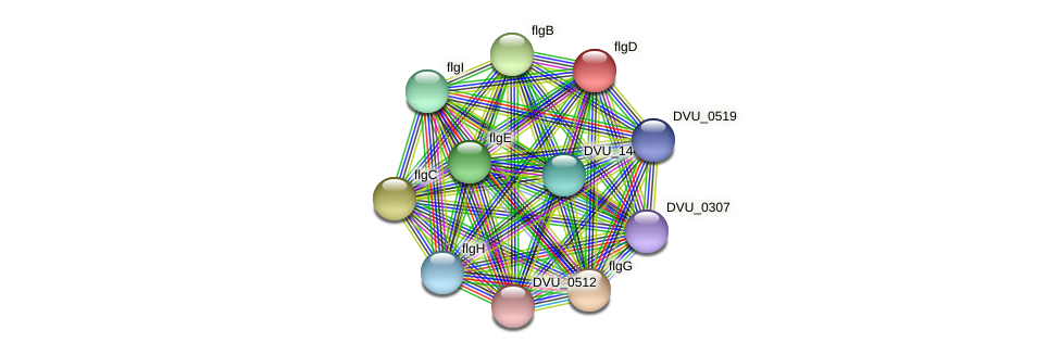 flgD protein (Desulfovibrio vulgaris Hildenborough) - STRING interaction network