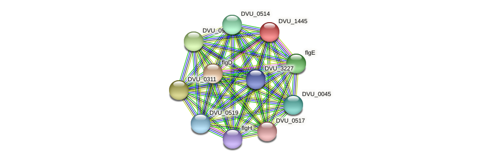 DVU_1445 protein (Desulfovibrio vulgaris Hildenborough) - STRING interaction network
