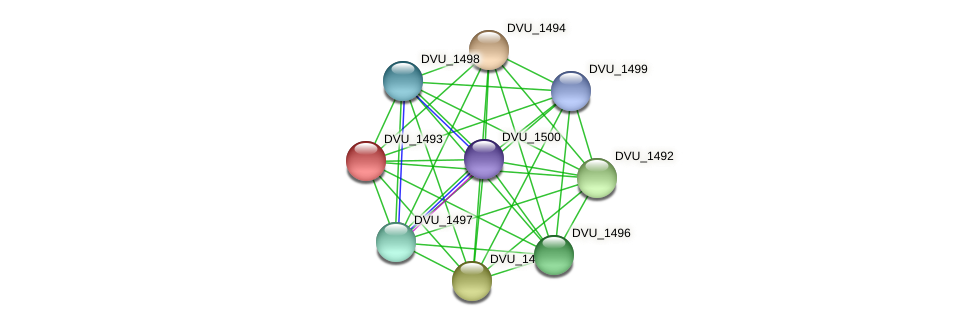 DVU_1493 protein (Desulfovibrio vulgaris Hildenborough) - STRING interaction network