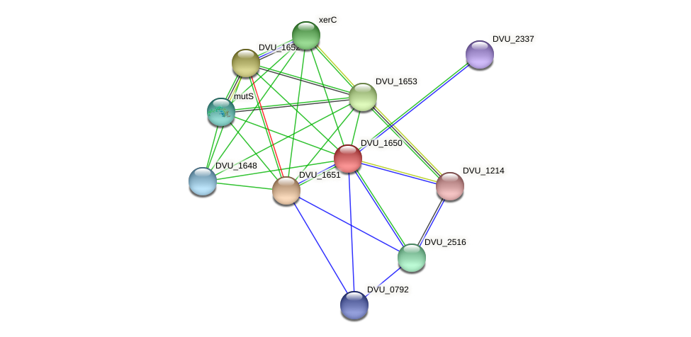 DVU_1650 protein (Desulfovibrio vulgaris Hildenborough) - STRING interaction network