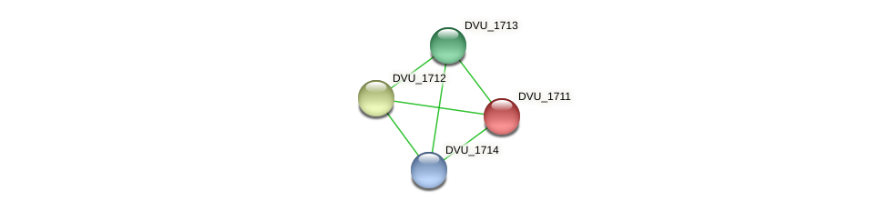 DVU_1711 protein (Desulfovibrio vulgaris Hildenborough) - STRING interaction network