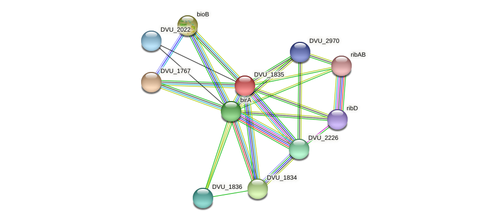 DVU_1835 protein (Desulfovibrio vulgaris Hildenborough) - STRING interaction network