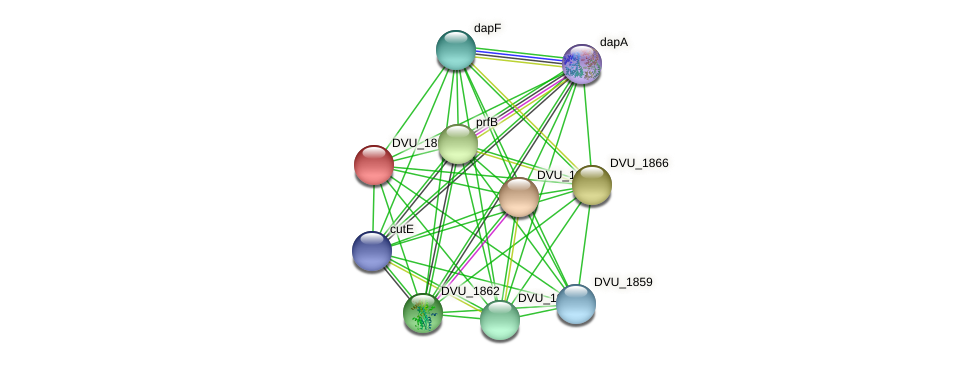 DVU_1865 protein (Desulfovibrio vulgaris Hildenborough) - STRING interaction network