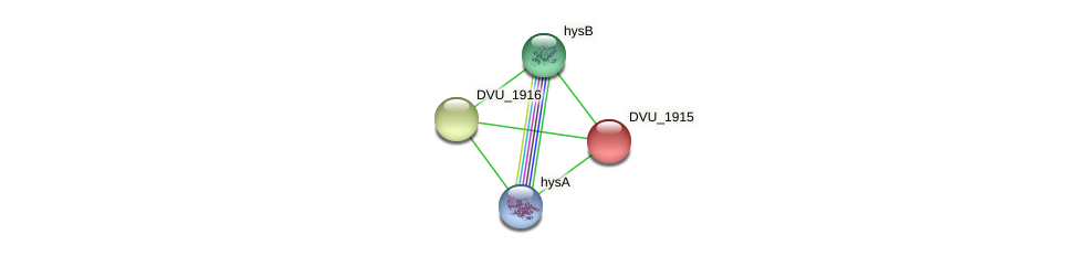DVU_1915 protein (Desulfovibrio vulgaris Hildenborough) - STRING interaction network