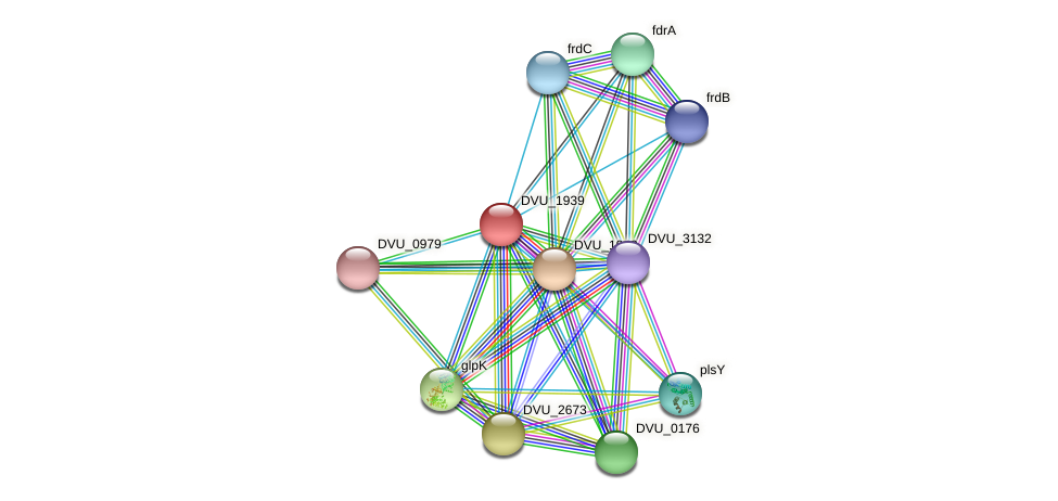 DVU_1939 protein (Desulfovibrio vulgaris Hildenborough) - STRING interaction network