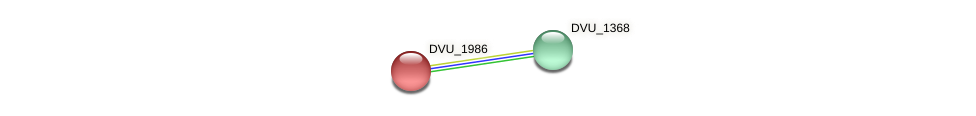 DVU_1986 protein (Desulfovibrio vulgaris Hildenborough) - STRING interaction network