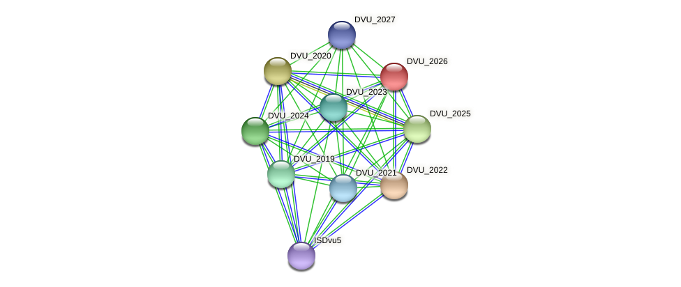 DVU_2026 protein (Desulfovibrio vulgaris Hildenborough) - STRING interaction network