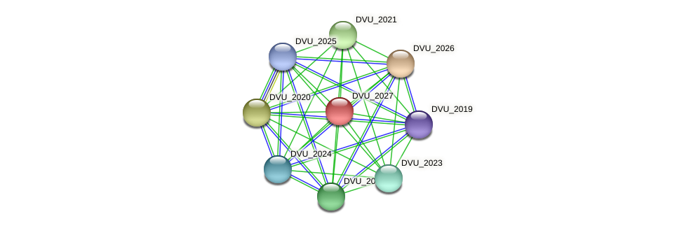 DVU_2027 protein (Desulfovibrio vulgaris Hildenborough) - STRING interaction network
