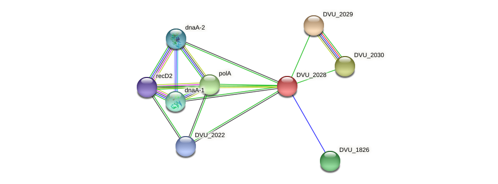 DVU_2028 protein (Desulfovibrio vulgaris Hildenborough) - STRING interaction network