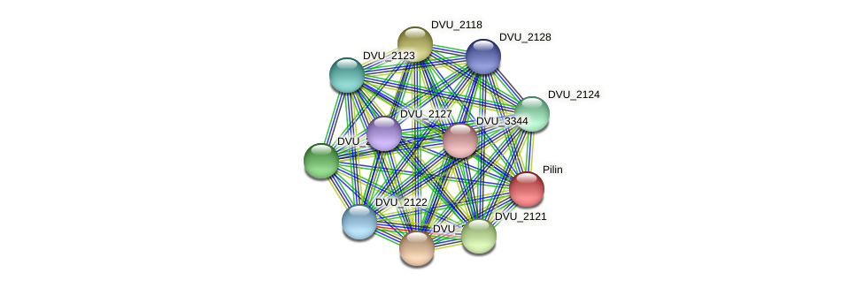 DVU_2116 protein (Desulfovibrio vulgaris Hildenborough) - STRING interaction network