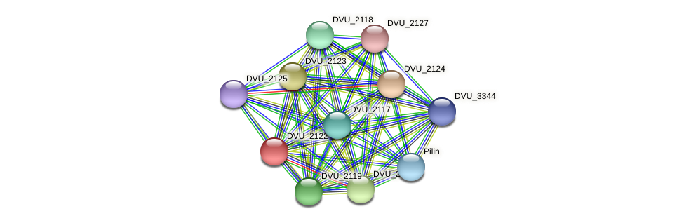 DVU_2122 protein (Desulfovibrio vulgaris Hildenborough) - STRING interaction network