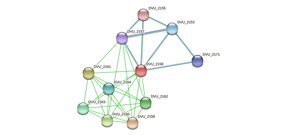 DVU_2159 protein (Desulfovibrio vulgaris Hildenborough) - STRING interaction network