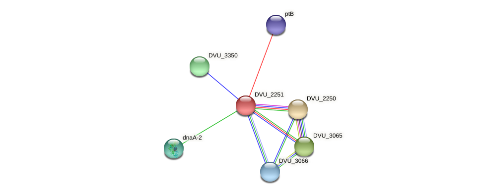 DVU_2251 protein (Desulfovibrio vulgaris Hildenborough) - STRING interaction network