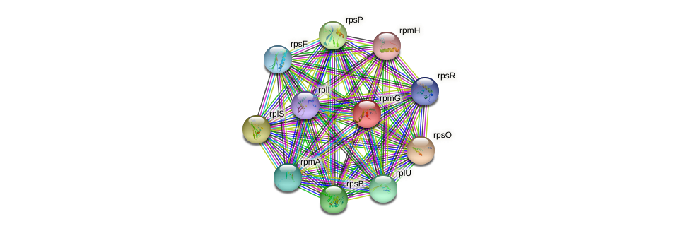 rpmG protein (Desulfovibrio vulgaris Hildenborough) - STRING interaction network