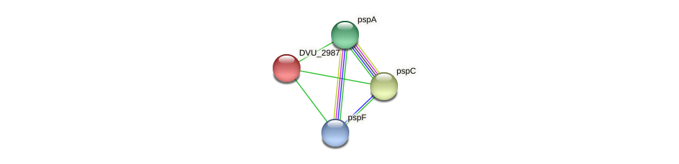 DVU_2987 protein (Desulfovibrio vulgaris Hildenborough) - STRING interaction network