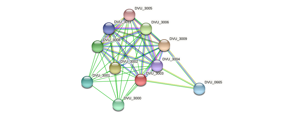 DVU_3003 protein (Desulfovibrio vulgaris Hildenborough) - STRING interaction network