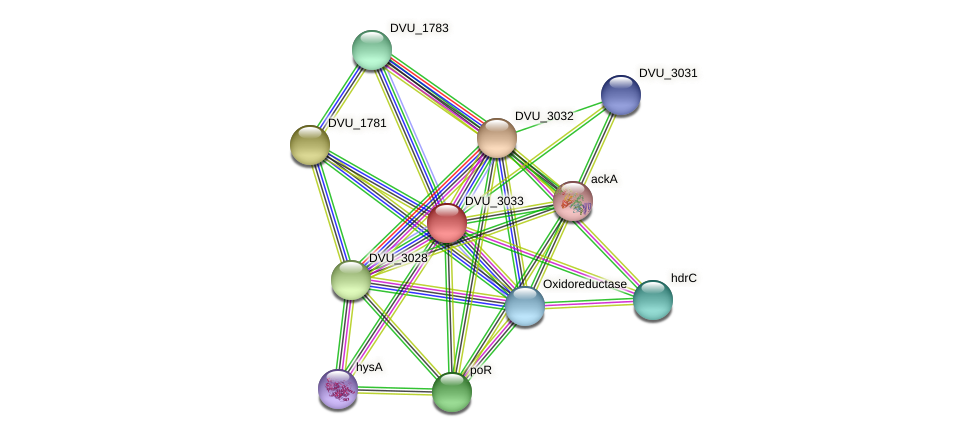 DVU_3033 protein (Desulfovibrio vulgaris Hildenborough) - STRING interaction network