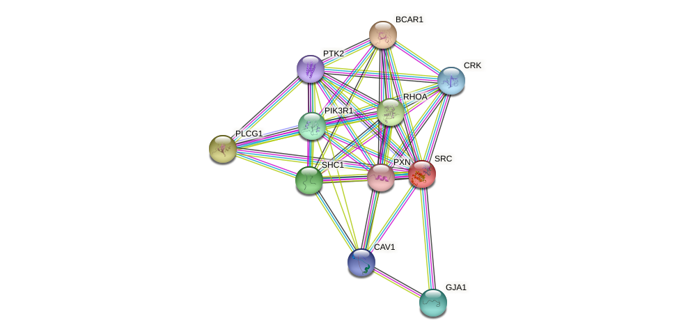 SRC protein (Gallus gallus) - STRING interaction network