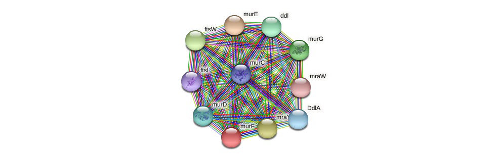 murF protein (Ewingella americana) - STRING interaction network