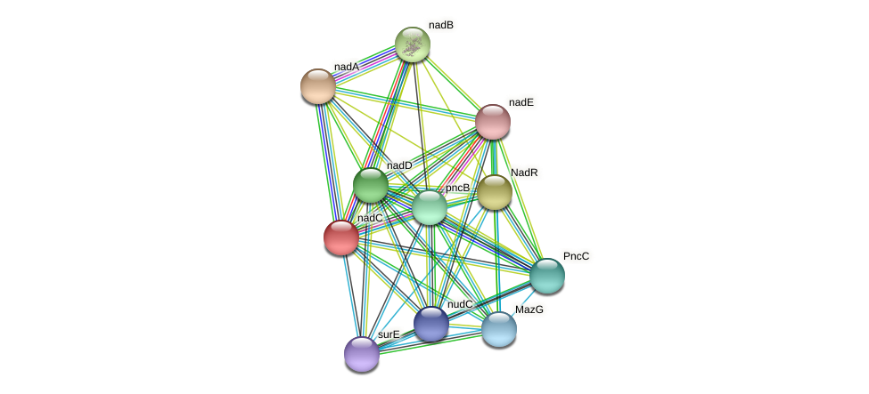 nadC protein (Ewingella americana) - STRING interaction network