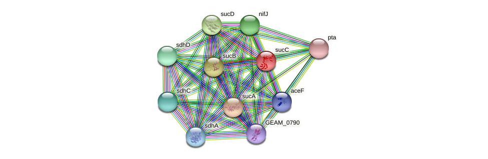 sucC protein (Ewingella americana) - STRING interaction network