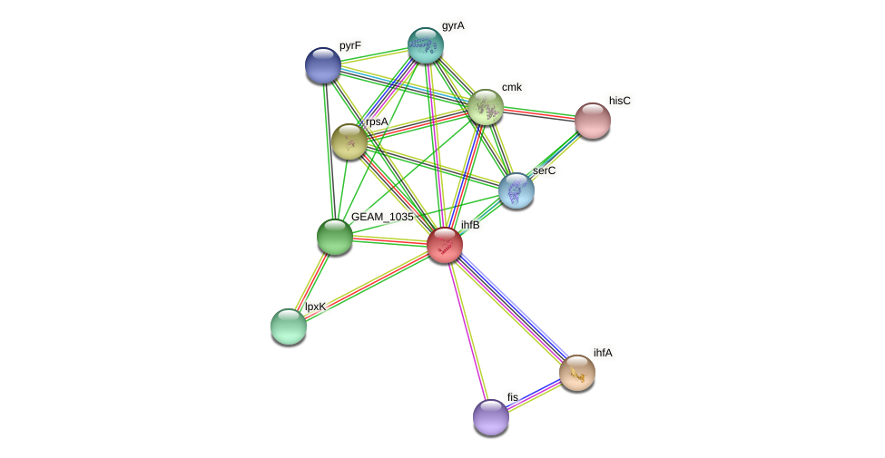 ihfB protein (Ewingella americana) - STRING interaction network