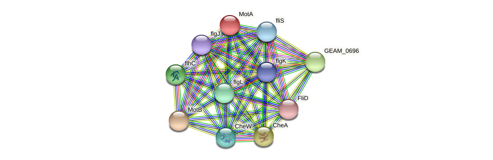 GEAM_1406 protein (Ewingella americana) - STRING interaction network