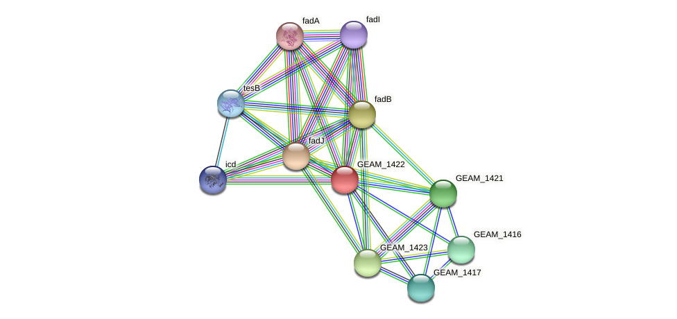 GEAM_1422 protein (Ewingella americana) - STRING interaction network