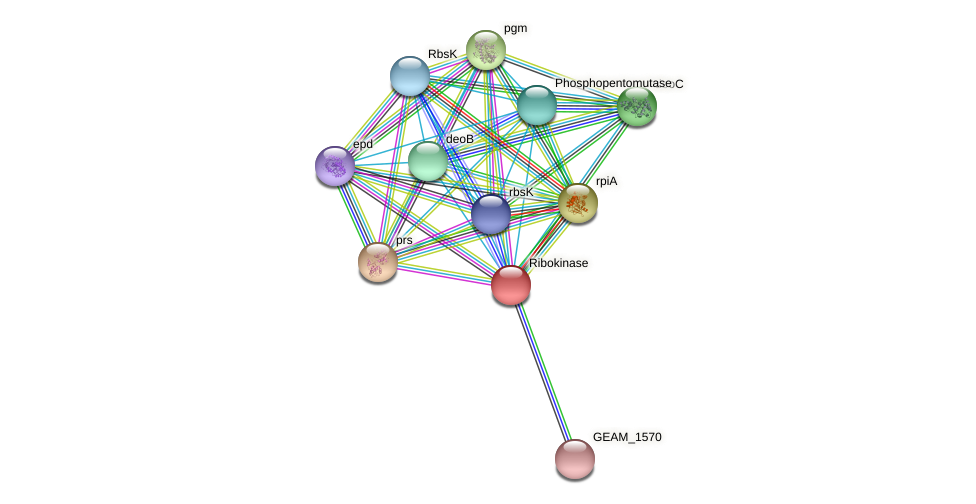 GEAM_1569 protein (Ewingella americana) - STRING interaction network