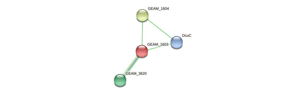GEAM_1603 protein (Ewingella americana) - STRING interaction network