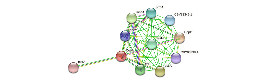 CopA protein (Helicobacter felis) - STRING interaction network