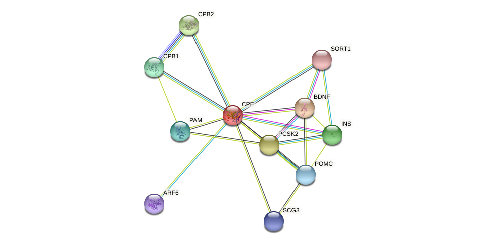 CPE protein (Macaca fascicularis) - STRING interaction network