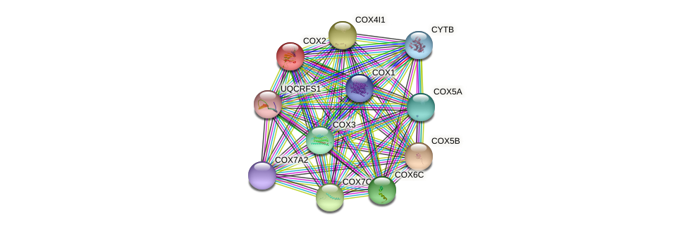 COX2 protein (Gorilla gorilla) - STRING interaction network