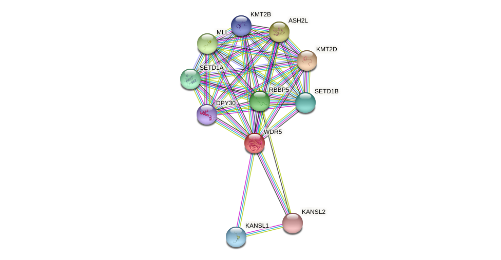 WDR5 protein (Pan troglodytes) - STRING interaction network