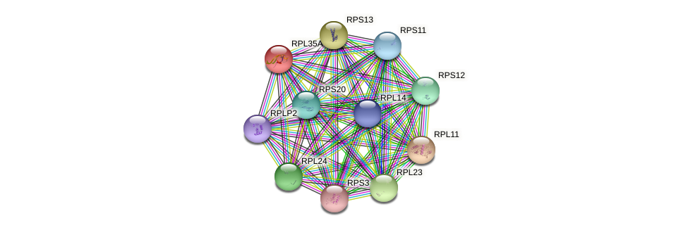 RPL35A protein (Pongo abelii) - STRING interaction network