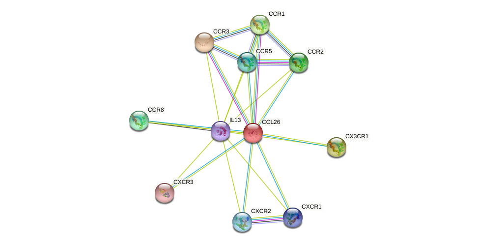 CCL26 protein (human) - STRING interaction network