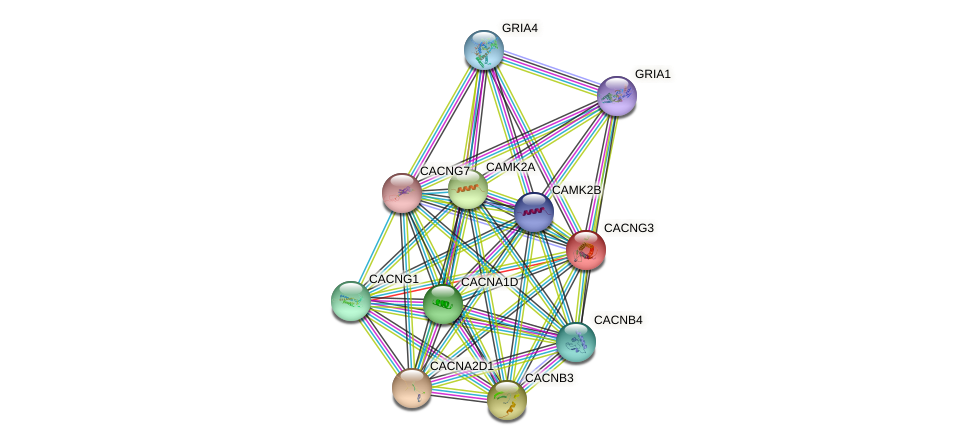CACNG3 protein (human) - STRING interaction network