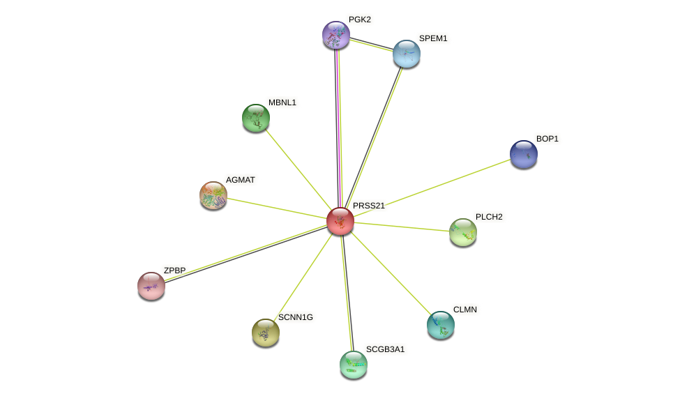 PRSS21 protein (human) - STRING interaction network