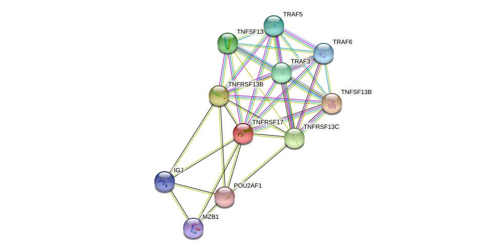 TNFRSF17 protein (human) - STRING interaction network