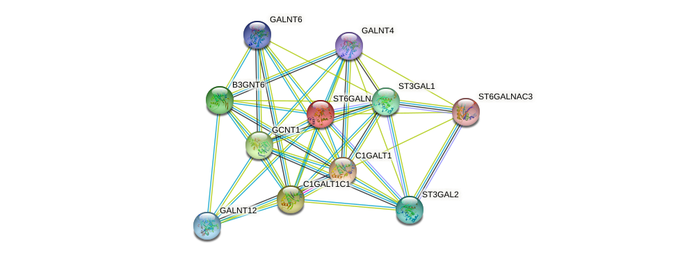 ST6GALNAC1 protein (human) - STRING interaction network