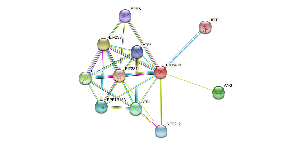 EIF2AK1 protein (human) - STRING interaction network