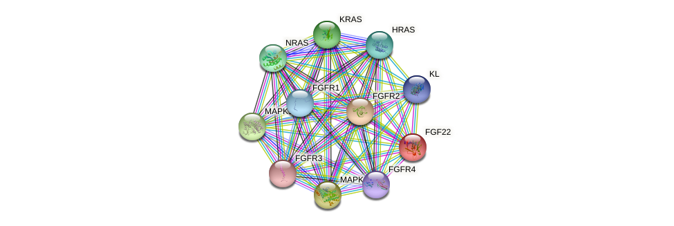 FGF22 protein (human) - STRING interaction network