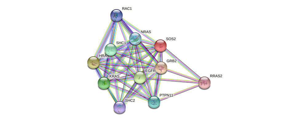 SOS2 protein (human) - STRING interaction network
