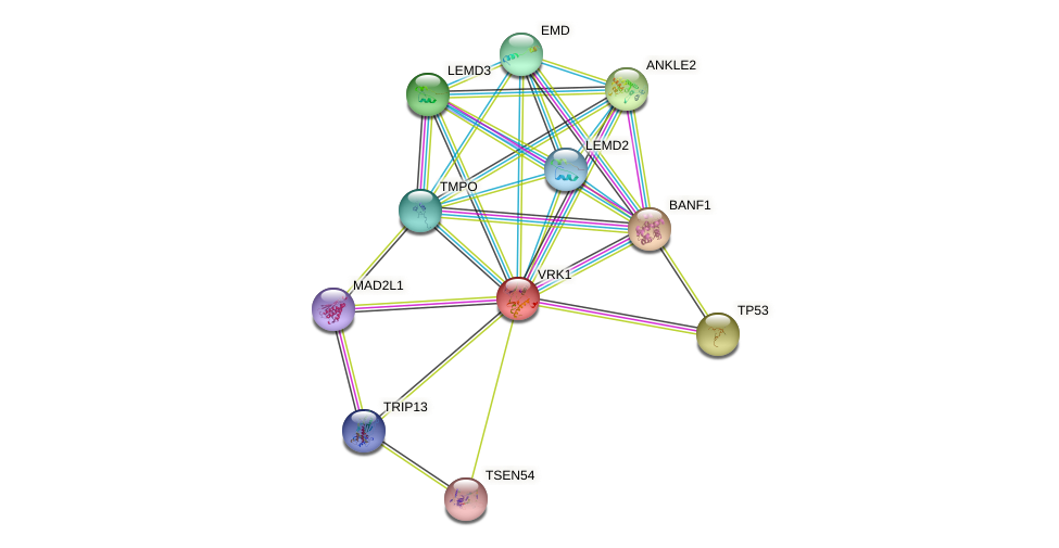 VRK1 protein (human) - STRING interaction network