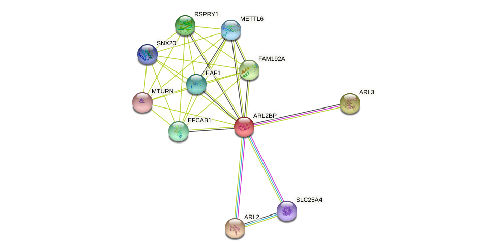 ARL2BP protein (human) - STRING interaction network