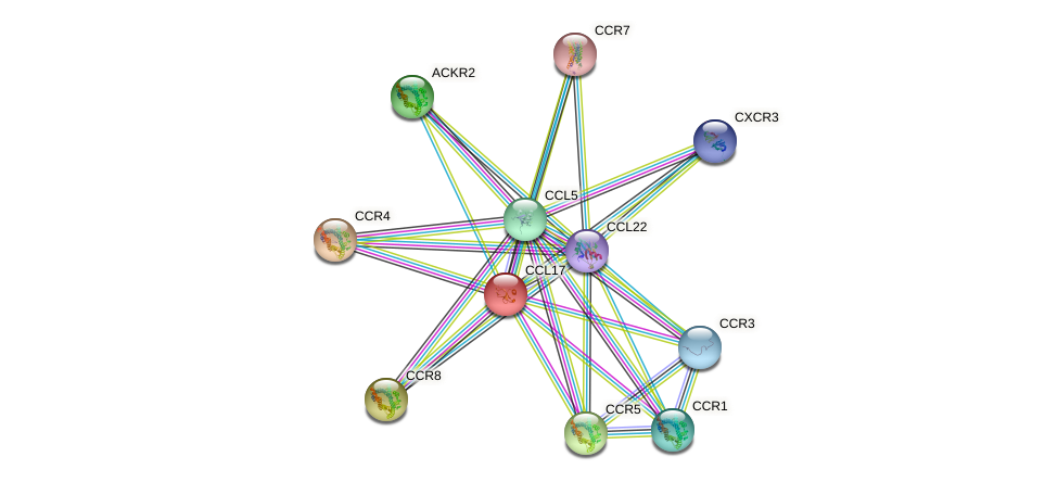 CCL17 protein (human) - STRING interaction network
