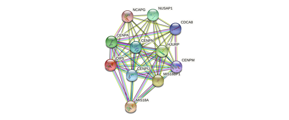 OIP5 protein (human) - STRING interaction network